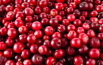 Cranberry-Shampoozutat